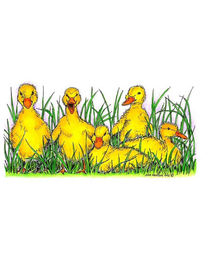 Baby Ducks In Grass - O8455