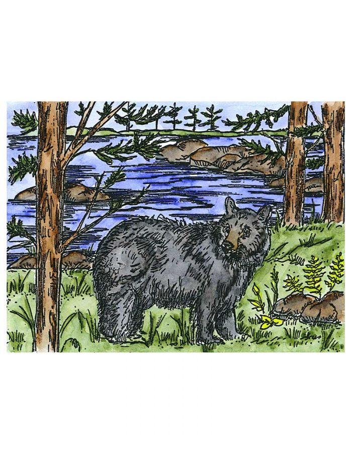 Bear, Pines and Lake - NN10619