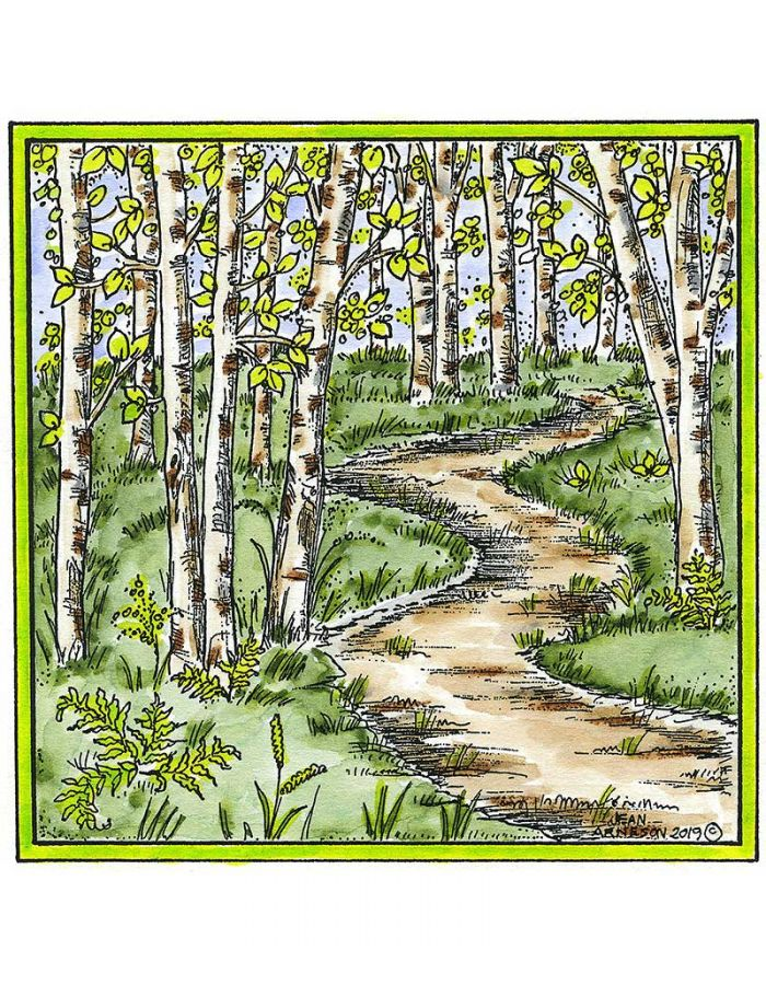Birch Walking Path - PP10620