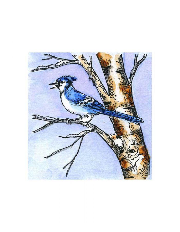 Blue Jay On Birch - CC11055