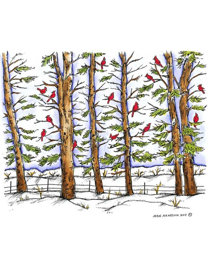 Cardinals in Pine Forest - P8293