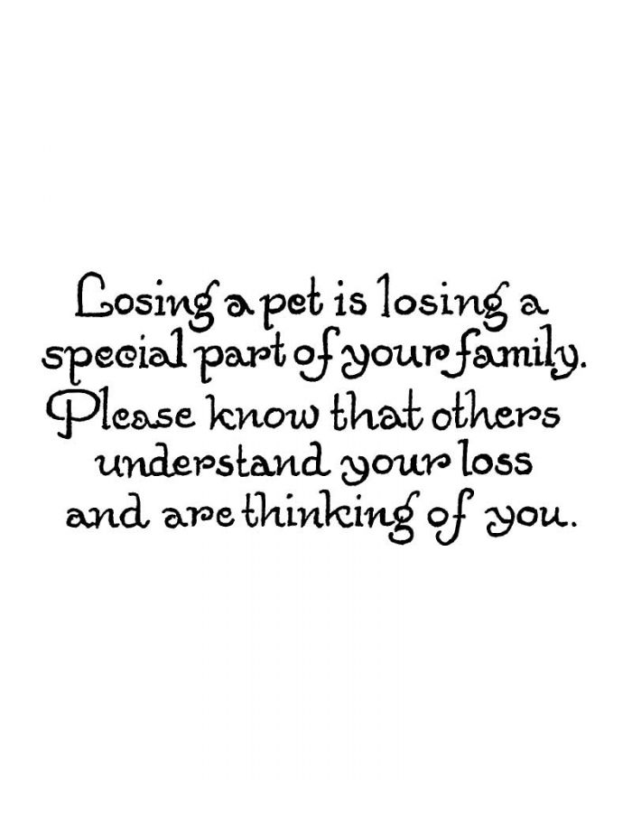 Losing A Pet is Losing A Special - D10451