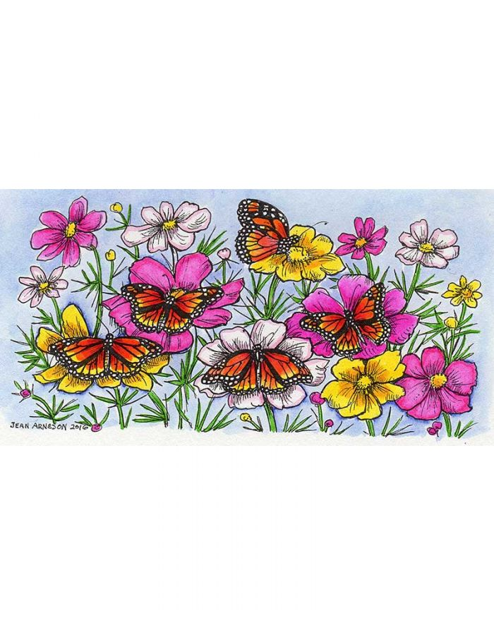 Monarchs and Cosmos Border - O9927