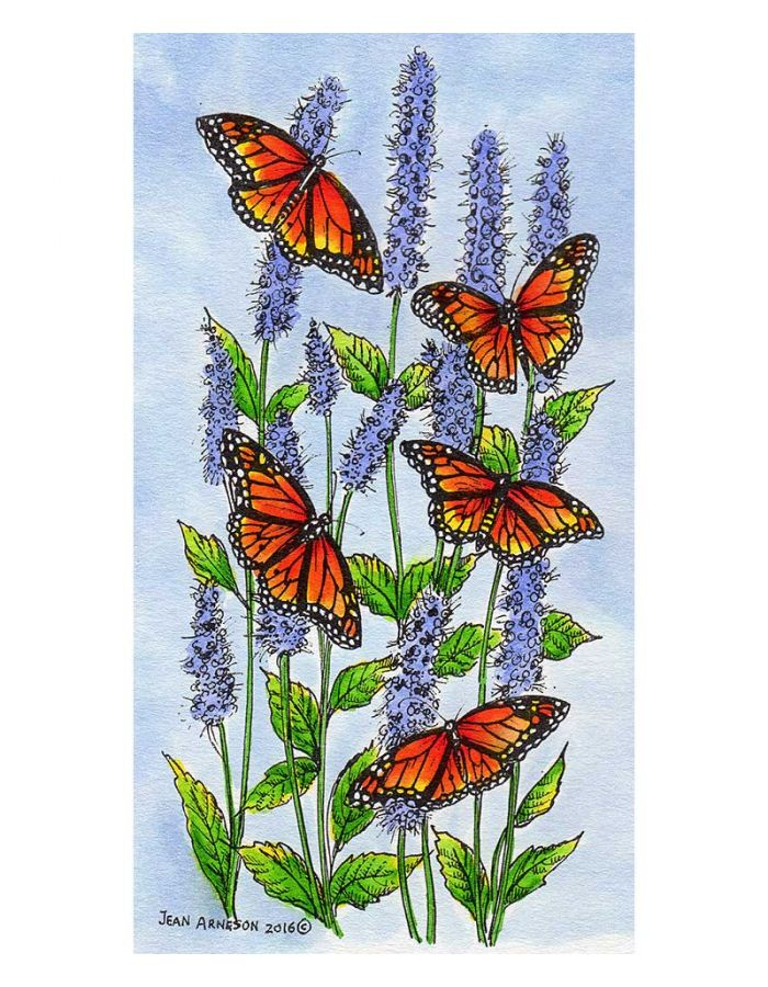 Monarchs on Hyssop - O9929