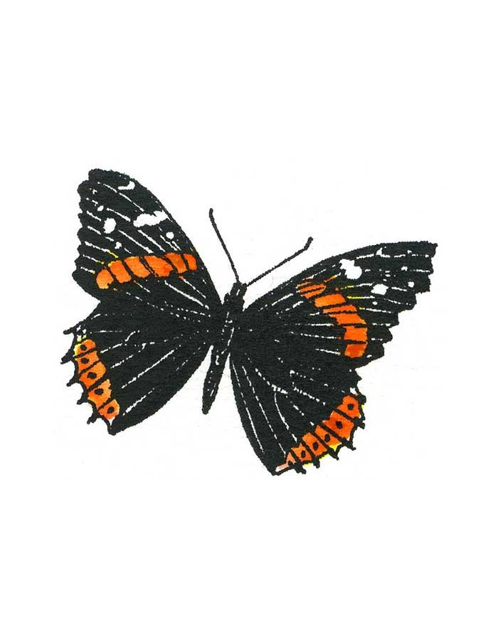 Red Admiral - C10793