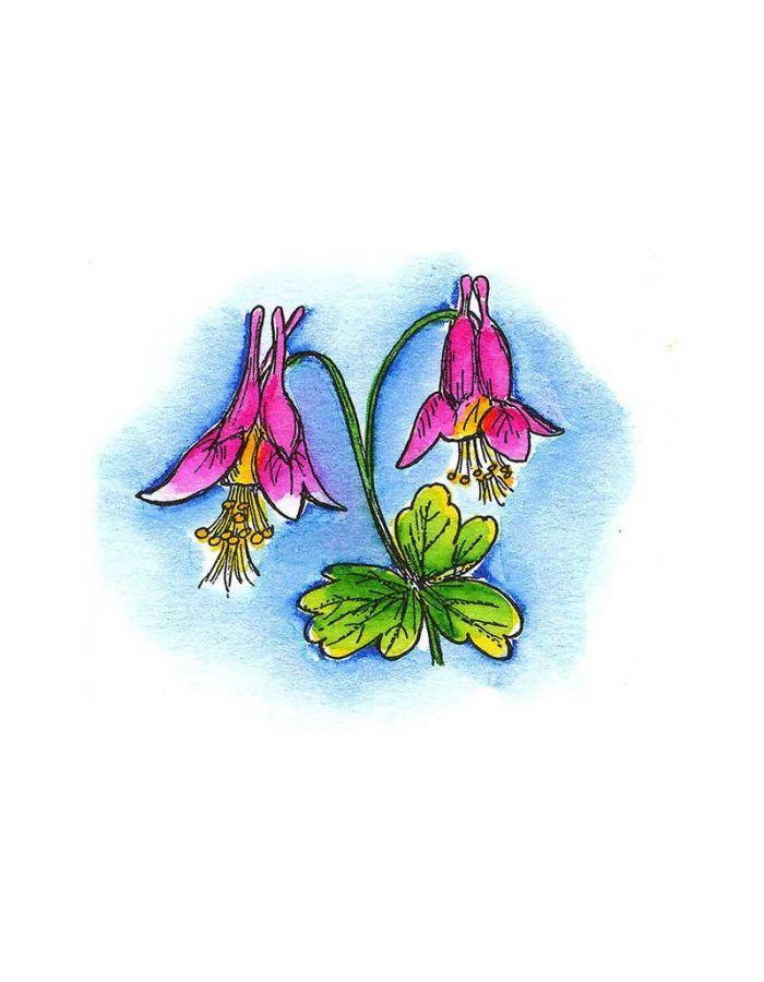 Small Columbine Blossom - B8029