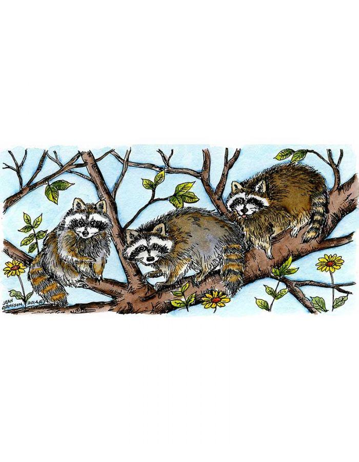 Three Raccoons In Tree - O9527