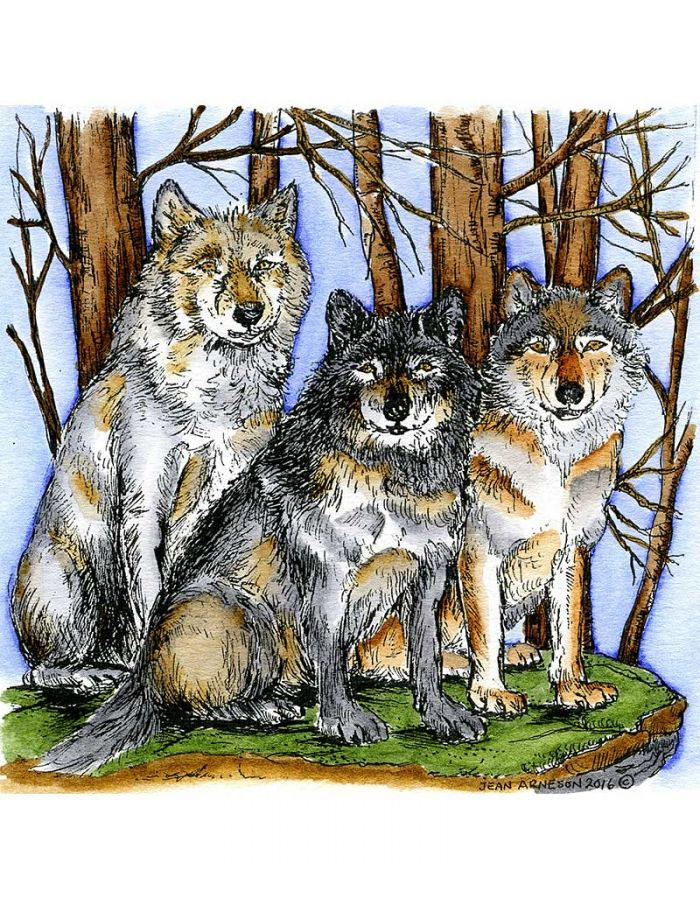 Three Wolves in Woods - PP9977