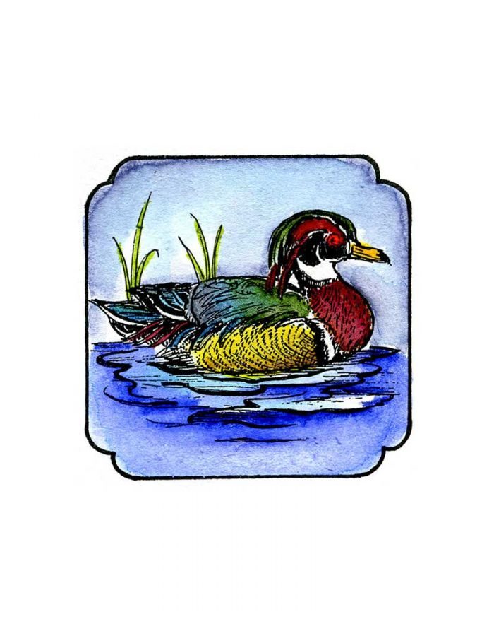 Wood Duck In Curved Frame - CC9047
