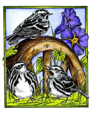 Black and White Warblers on Wheel - P10198