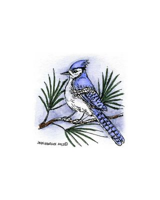 Blue Jay on Pine - C8890