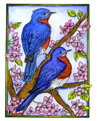 Bluebird Pair on Blossoms - P10181