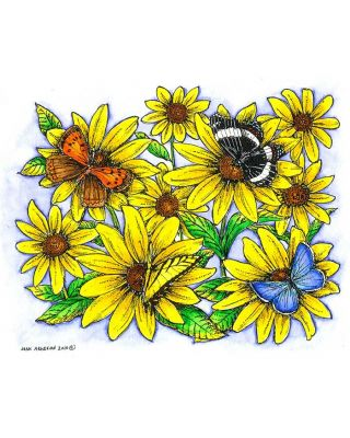 Brown-Eyed Susan with Four Butterflies - P7276