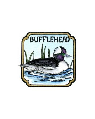 Bufflehead in Curved Frame - CC10209