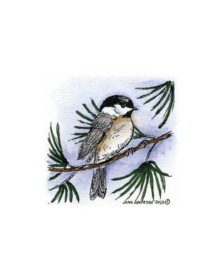 Chickadee on Pine - C8883