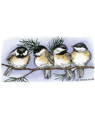 Four Chickadees on Pine Branch - O8880