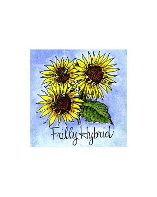 Frilly Hybrid Sunflower - C10089