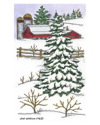 Large Spruce and Barn - O10727