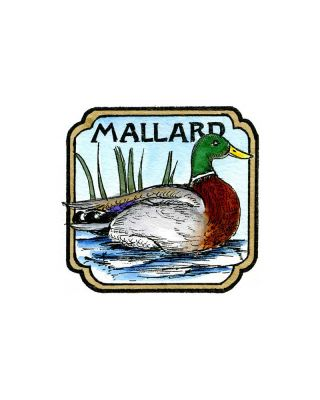 Mallard in Curved Square - CC10207