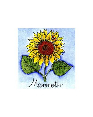 Mammoth Sunflower - C10086