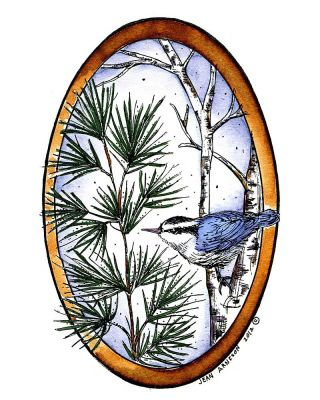 Pine and Birch With Nuthatch Oval - P8873