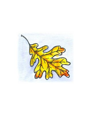 White Oak Leaf - C10486